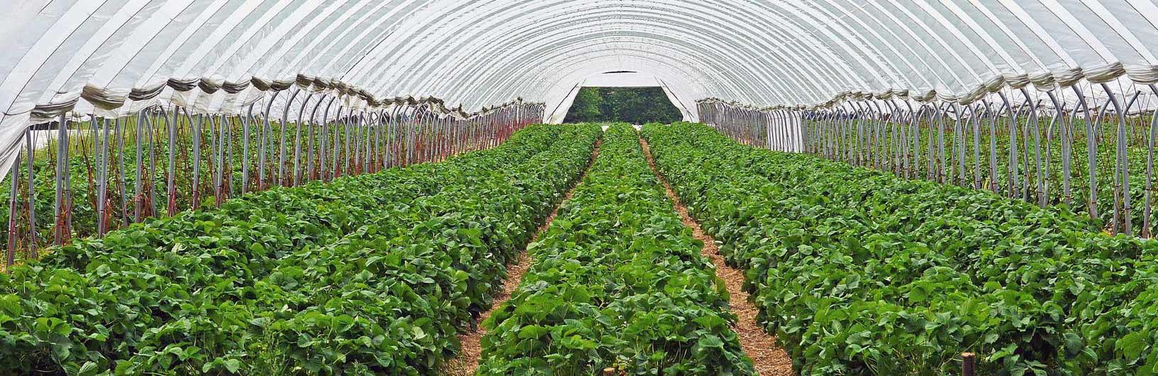 Pour l'horticulture